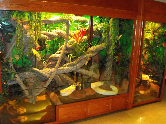 Reptile Enclosures - Image 683242